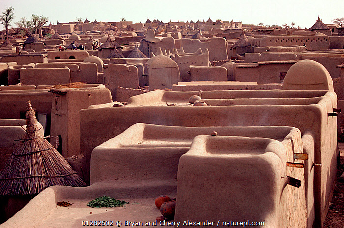 Mud huts and thatched granaries in the Dogon village of Sangha. Mali, West Africa, 1981.  ,  AFRICA,ARCHITECTURE,BUILDINGS,HOMES,MUD,NORTH AFRICA,ROOFS,TRADITIONAL,TRIBES,VILLAGES,WEST AFRICA  ,  Bryan and Cherry Alexander