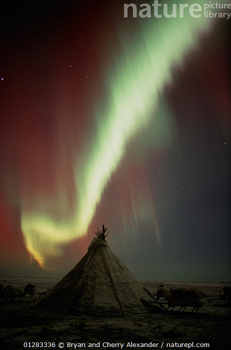 Northern lights (Aurora borealis) over a Nenets herders' camp. Yamal Peninsula, Western Siberia, Russia, 2001.  ,  ARCTIC,ASIA,ATMOSPHERIC,COLOURFUL,LANDSCAPES,LIGHTS,NIGHT,RUSSIA,SIBERIA,SKIES,STARS,TENT,TENTS,VERTICAL,CIS,Wonder,Spectacular,  ,  Bryan and Cherry Alexander