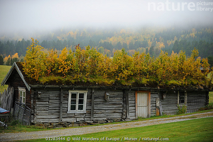 Wood building with green roof, Forollhogna National Park, Norway, September 2008, BUILDINGS,EUROPE,FORESTS,GREEN ROOF,LANDSCAPES,MIST,NORWAY,NP,PLANTS,RESERVE,ROOFS,SCANDINAVIA,VINCENT MUNIER,WWE, Scandinavia,National Park, Wild Wonders of Europe / Munier