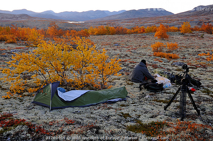 Photographer, Vincent Munier, at campsite, Forollhogna National Park, Norway, September 2008. On location for Wild Wonders of Europe  ,  CAMERAS,CAMPING,EUROPE,LANDSCAPES,MOUNTAINS,NORWAY,NP,PEOPLE,RESERVE,SCANDINAVIA,TENTS,TUNDRA,VINCENT MUNIER,WWE, Scandinavia,National Park  ,  Wild Wonders of Europe / Munier