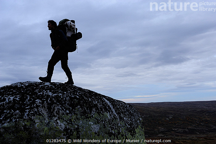 Photographer, Vincent Munier, walking over large rock, Forollhogna National Park, Norway, September 2008, DUSK,EUROPE,NORWAY,NP,PEOPLE,RESERVE,ROCKS,SCANDINAVIA,SILHOUETTES,VINCENT MUNIER,WALKING,WWE, Scandinavia,National Park, Wild Wonders of Europe / Munier