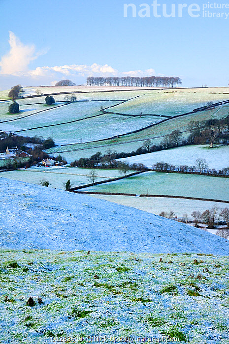 Frozen, snow-dusted pastureland, arable fields, farmhouses and row of trees on Frozen Hill, near Bath, Somerset, UK, winter. December 2009  ,  ENGLAND,EUROPE,FIELDS,FROST,GRASSLAND,ICE,LANDSCAPES,SNOW,TREES,UK,VERTICAL,WINTER,Weather,PLANTS, United Kingdom  ,  Nick Upton