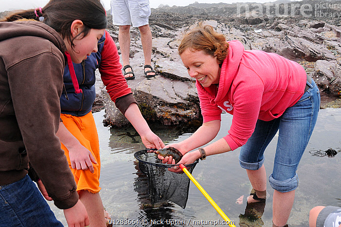 Mother and daughter looking at Rock cook / Small mouthed wrasse (Centrolabrus exoletus) caught in a rock pool on a low tide with a fishing net. Cornwall, UK. Model released, April 2009  ,  BEACHES,CHILDREN,CLEANER,COASTS,EUROPE,FAMILIES,FISH,LABRIDAE,LEARNING,LEISURE,MARINE,NETS,PEOPLE,ROCKPOOLING,ROCK POOLS,TIDEPOOLS,UK,WRASSES, United Kingdom  ,  Nick Upton