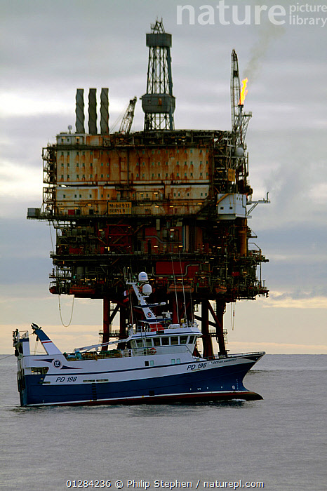 """Fishing vessel """"Ocean Harvest"""" operating close to the """"Beryl Bravo"""" production platform, 160 miles Northeast of Aberdeen, in the North Sea. March 2010.  ,  CALM,EUROPE,FISHING,INDUSTRY,OIL,OILRIG,OIL RIG,PROFILE,TRAWLERS,VERTICAL,BOATS, WORKING-BOATS  ,  Philip Stephen"""