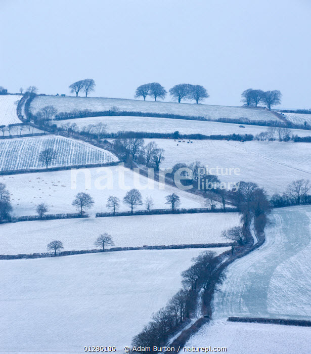 Winding country lane and rural landscape covered in snow near Stockleigh Pomeroy, Mid Devon, England. February 2009, COUNTRYSIDE,EUROPE,FARMLAND,FIELDS,HEDGEROWS,LANDSCAPES,ROADS,SNOW,TREES,UK,WEATHER,WINTER,PLANTS, United Kingdom, Adam Burton