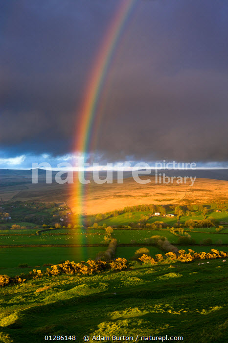 Rainbow above rolling farmland on the edges of Dartmoor National Park, Devon, England. April 2009  ,  CLOUDS,EUROPE,FARMLAND,LANDSCAPES,LIGHT,MOORLAND,NP,RAIN,RAINBOWS,STORMS,SUN,UK,VERTICAL,WEATHER,National Park, United Kingdom  ,  Adam Burton