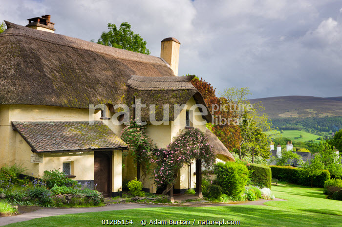 Pretty thatched cottage in the picturesque village of Selworthy, Exmoor National Park, Somerset, England. May 2009  ,  CHARACTER,EUROPE,HOMES,LANDSCAPES,NP,PERIOD,PICTURESQUE,THATCH,TOURISM,TRADITIONAL,UK,National Park, United Kingdom  ,  Adam Burton