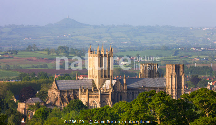 Wells Cathedral and Glastonbury Tor in distance on a misty Spring morning, Wells, Somerset, England. May 2009  ,  CATHEDRALS,CHURCHES,CITIES,EUROPE,HILLS,LANDSCAPES,MIST,SPIRITUAL,UK, United Kingdom  ,  Adam Burton