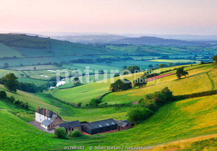 Farmhouse and barns, in the Exe valley overlooking the River Exe, Devon, England. June 2009  ,  BUILDINGS,COUNTRYSIDE,EUROPE,FARM,FARMLAND,FIELDS,LANDSCAPES,SPRING,TREES,UK,PLANTS, United Kingdom  ,  Adam Burton