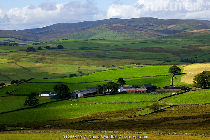 Upland farm on the edge of Snowdonia NP, North Wales, August 2009  ,  AGRICULTURE,BUILDINGS,CROPS,EUROPE,FARMLAND,LANDSCAPES,MOUNTAINS,NP,UK,National Park, United Kingdom  ,  David Woodfall