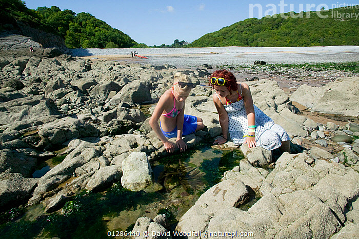 Twelve-year and sixteen-year  girls looking in rockpools, Pwll Du National Trust coastal property Gower West Glamorgan, Wales, August 2009  ,  COASTS,EUROPE,GIRLS,HOLIDAYS,LANDSCAPES,LEISURE,NATURE,OUTDOORS,PEOPLE,ROCKPOOLS,ROCK POOLS,ROCKS,SHORE,SUMMER,TIDE POOLS,UK,Concepts, United Kingdom  ,  David Woodfall