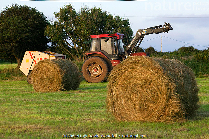 Tractor and baling machine haymaking. Large round bales in the Gower, West Glamorgan, Wales, August 2009  ,  AGRICULTURE,EUROPE,FARMING,GRASS,HARVESTING,HAY,SUMMER,TRACTORS,UK,VEHICLES,WORKING,Plants, United Kingdom  ,  David Woodfall