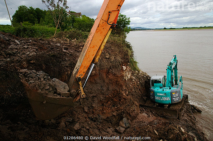 Clearing dock at Bulls Pit,  Fred Larkham, Gloucestershire boatman. Severn Estuary. England, August 2009  ,  BULLDOZERS,CLEANING,CLEARING,DIGGING,DOCKS ,ESTUARIES,EUROPE,INDUSTRY,MACHINERY,UK,WATER,WORKING, United Kingdom  ,  David Woodfall