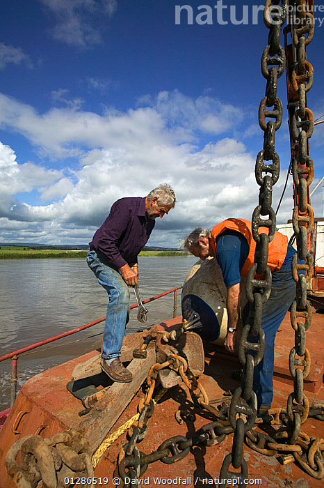 At work on Severn Estuary barge. Severn Estuary, England, August 2009  ,  ABOARD,BARGE,BARGES,BOATS,BUOYS,CHAINS,CREWS,CULTURES,ESTUARIES,ESTUARY,EUROPE,FENDERS,FOREDECKS,LANDSCAPES,LIFESTYLES,MEN,PEOPLE,PROCEDURES,RIVERS,TRADITIONAL,UK,VERTICAL,WATER,WORKING,BOAT-PARTS,CONCEPTS, United Kingdom  ,  David Woodfall
