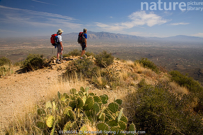 Two hikers on the summit of Wasson Peak in Saguaro National Park. Arizona, USA, March 2009, model released  ,  DESERTS,HIKING,LANDSCAPES,LEISURE,MOUNTAINS,NORTH AMERICA,NP,PEOPLE,WALKNG,National Park  ,  Kirkendall-Spring