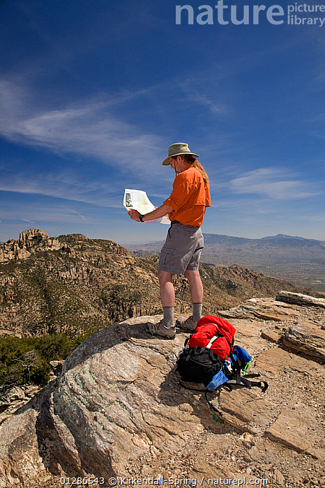 Hiker looking at map, in Finger Rock Canyon on the Mount Kimball Trail part of the Pusch Ridge Wilderness of Coronado National Forest, USA, March 2009, model released  ,  DESERTS,HIKING,LANDSCAPES,LEISURE,MAN,MAP READING,MOUNTAINS,NORTH AMERICA,PEOPLE,VERTICAL,WALKING  ,  Kirkendall-Spring