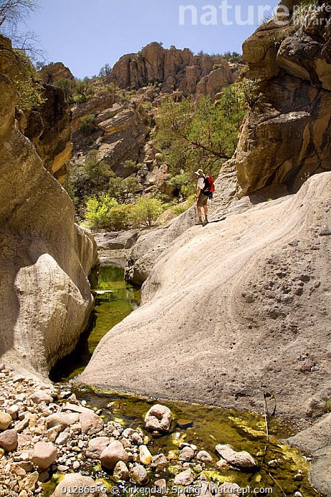 Hiker walking in Sycamore Canyon part of Pajarita Wilderness of Coronado National Forest. Arizona, USA, March 2009  ,  EROSION,GEOLOGY,HIKING,LANDSCAPES,LEISURE,NORTH AMERICA,PEOPLE,STREAMS,VERTICAL,WALKING,WATER  ,  Kirkendall-Spring