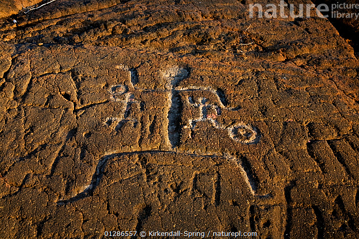 Puako Petroglyphs near the Holoholokai Beach Park on the South Kohala area of the Big Island. The Big Island of Hawaii, USA, December 2008  ,  ART,Big Island,carvings,CATALOGUE2,cave painting,close up,CLOSE UPS,dancing,figurative,Hawaii,Historic,Holoholokai Beach Park,human likeness,Nobody,NP,outdoors,PACIFIC ISLANDS,petroglyph,Puako culture,rock art,RUNNING,South Kohala,USA,National Park,North America  ,  Kirkendall-Spring