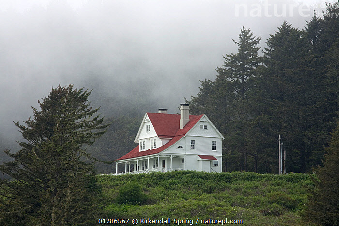 Lighthouse keepers house at Heceta Head Light, Devels Elbow. Oregon, USA, May 2008  ,  BUILDINGS,FORESTS,LANDSCAPES,MIST,NORTH AMERICA,WEATHER  ,  Kirkendall-Spring