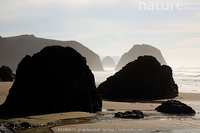 Haystack Rock in the distance viewed from Crescent Beach on a foggy day in Ecola State Park near Cannon Beach. Oregon, USA, November 2009  ,  BEACHES,COASTS,LANDSCAPES,MIST,NORTH AMERICA,PACIFIC,ROCK FORMATIONS,WEATHER  ,  Kirkendall-Spring