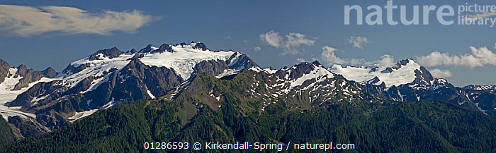 Mount Olympus and Mount Tom viewed from the High Divide in Olympic National Park. Washington, USA, July 2009  ,  LANDSCAPES,MOUNTAINS,NORTH AMERICA,NP,PANORAMIC,SNOW,National Park  ,  Kirkendall-Spring
