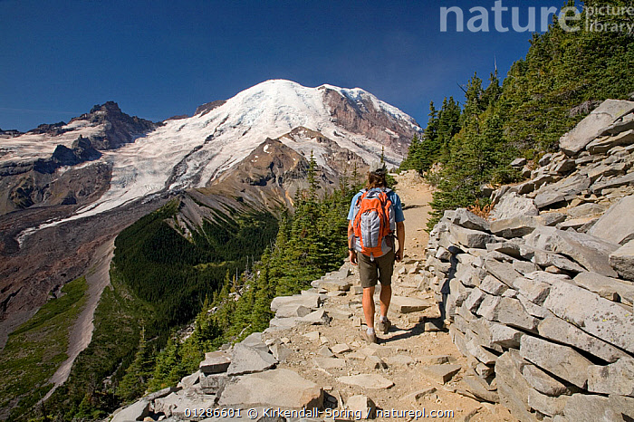 Person hiking along the Burroughs Loop Trail near Sunrise in Mount Rainier National Park. Washington, USA, August 2009, model released  ,  FOOTPATHS,LANDSCAPES,LEISURE,MOUNTAINS,NORTH AMERICA,PEOPLE,SUNRISE,TRAILS,WALKING  ,  Kirkendall-Spring