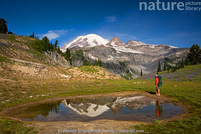 Person hiking standing next to small pond above Indian Bar in Mount Rainier National Park. Washington, USA, August 2009  ,  HIKING,LANDSCAPES,LEISURE,MAN,MOUNTAINS,NORTH AMERICA,NP,PEOPLE,REFLECTIONS,WALKING,National Park  ,  Kirkendall-Spring