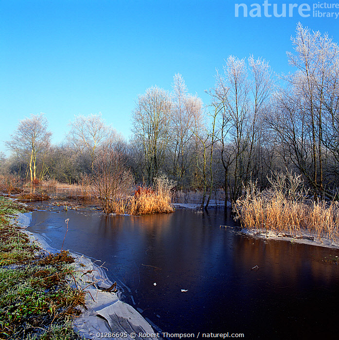 Brackagh Moss NNR in winter, Portadown, County Down, Northern Ireland, UK, January 2003  ,  COLD,EUROPE,ICE,LAKES,LANDSCAPES,RESERVE,UK,ULSTER,WINTER,United Kingdom  ,  Robert Thompson