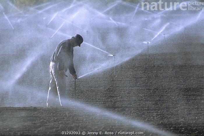Sprinkler irrigation of a crop in California's Imperial Valley, using Colorado River water. California, USA  December 2008  ,  adult,AGRICULTURE,California,catalogue3,Caucasian,CROPS,ENVIRONMENTAL,farming,FARMLAND,Hazy,Imperial Valley,Irrigation,irrigation system,LANDSCAPES,looking down,MAN,NORTH AMERICA,one person,outdoors,PEOPLE,river water,sprinkler,STANDING,USA,WATER,water spray,watering,WORKING  ,  Jenny E. Ross