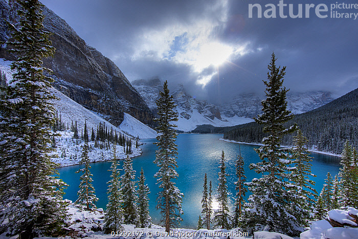 Morraine Lake, in the Valley of the Ten Peaks, after recent snowfall, Banff National Park, Alberta, Canada. October 2009  ,  Alberta,ATMOSPHERIC,Banff National Park,beauty in nature,CANADA,CATALOGUE2,DRAMATIC,FIR TREE ,FORESTS,Lake,LAKES,LANDSCAPES,Morraine Lake,MOUNTAINS,nature,Nobody,NORTH AMERICA,NP,outdoors,overcast,rockies,rocky mountains,Scenics,SKY,SNOW,snowfall,sunlight,TREES,TURQUOISE,Valley of Ten Peaks,WATER,WEATHER,WINTER,CONCEPTS,National Park,PLANTS,,Canadian Rocky Mountain Parks World Heritage Site, UNESCO World Heritage Site,Rocky Mountains,Rockies,NP,Reserve,  ,  David Noton