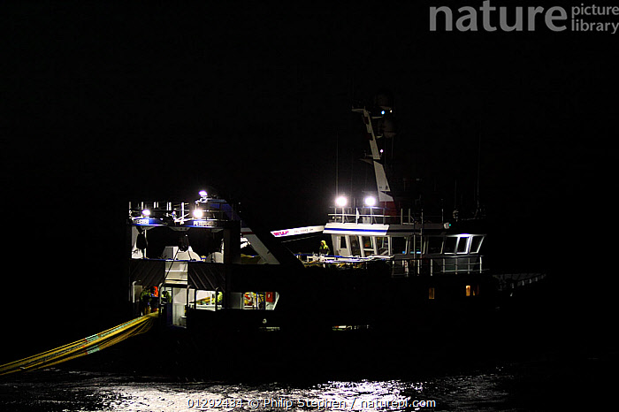 """Fishing vessel """"Harvester"""" hauling fishing gear in the dark, May 2010. Property released.  ,  black background,CATALOGUE2,dark,EUROPE,fishing boat,fishing equipment,fishing industry,FISHING BOATS,hauling,ILLUMINATED,LIGHTS,lit up,NIGHT,Nobody,outdoors,PROCEDURES,sea,transportation,TRAWLERS,WATER,BOATS,WORKING-BOATS  ,  Philip Stephen"""
