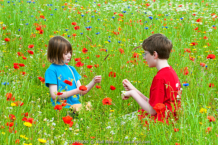 Young girl and boy playing in a wildflower meadow, Scotland, UK, July 2009, Boy,brother,CATALOGUE2,Caucasian,child,Childhood,CHILDREN,children only,ENVIRONMENTAL,EUROPE,face to face,female,Field,FLOWERS,girl,half length,male,meadow,MEADOWLAND,nature,outdoors,PAPAVER GENUS,PEOPLE,play,playing,Poppies,Poppy,RED,SCOTLAND,siblings,sister,SUMMER,t shirt,two people,UK,Wildflower,Grassland,Communication,United Kingdom, Niall Benvie