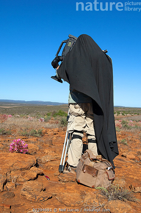 Cameraman Mark Yates with black cape filming Candelabra lily (Brunsvigia bosmaniae) for BBC series Life, Namaqualand, South Africa, March 2008, AFRICA,AMARYLLIDACEAE,CAUCASIAN,DESERTS,FILMING,FILMING IN WILD,FLOWERS,MAN,MONOCOTYLEDONS,OUTDOORS,PEOPLE,PLANTS,VERTICAL, Neil Lucas