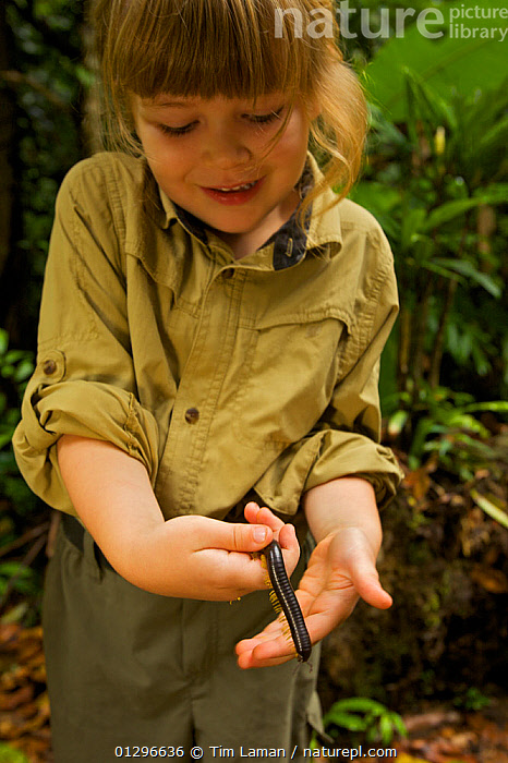 Young girl (model released) holding Giant millipede, tropical rainforest, Borneo, July 2007, ASIA,CAUCASIAN,CHILD,CHILDREN,GIRL,MILLIPEDES,MYRIAPODA,NATURE CHILDREN,OUTDOORS,PEOPLE,PORTRAITS,SCHOOL AGED,SOUTH EAST ASIA,TROPICAL RAINFOREST,VERTICAL,WILDLIFE, Tim Laman