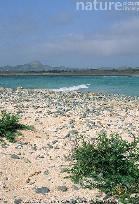 Masirah Island, coast and mountains, Oman, August  ,  ARABIA,COASTS,DESERTS,LANDSCAPES,MIDDLE EAST,TROPICAL,VERTICAL  ,  Hanne & Jens Eriksen