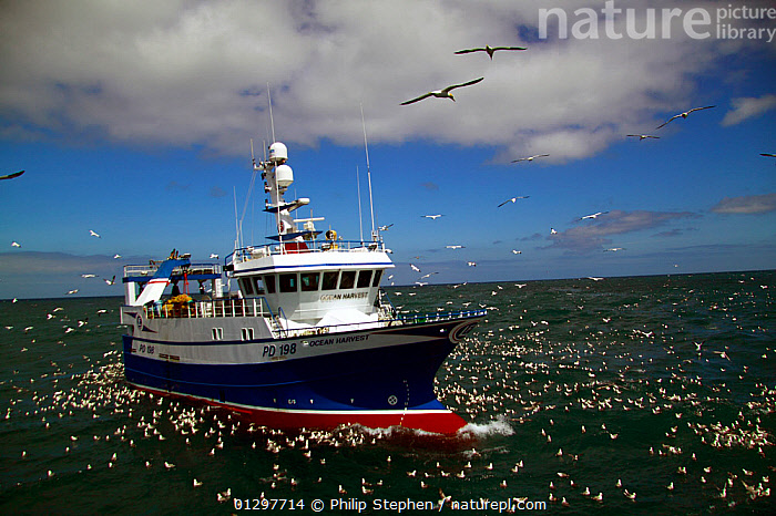 """Ocean Harvest "" fishing on the North Sea, surrounded by seabirds, June 2010. Property released.  ,  BIRDS,BOATS,CATALOGUE2,cloudy,EUROPE,FISHERIES,fishing boat,fishing industry,FISHING BOATS,FLOCKS,FLYING,FRONT VIEWS,group of animals,GULLS,horizon,horizon over water,INTERACTION,large group of animals,multitude,Nobody,North Sea,north sea,on the move,outdoors,seabird,SEABIRDS,seas,SKY,transportation,TRAWLERS,VERTEBRATES,WATER,WORKING BOATS,WORKING-BOATS ,core collection xtwox  ,  Philip Stephen"