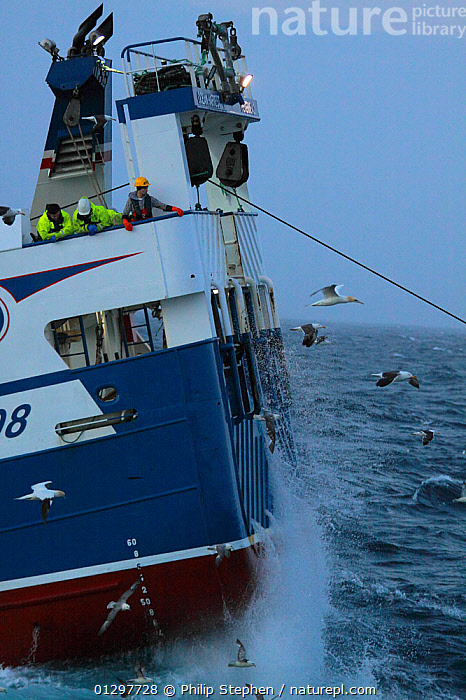 Trawler crew on stern looking as trawl drags behind. North Sea, July 2010.  ,  BIRDS,BOATS,CREWS,FISHING,FISHING BOATS,GULLS,MS,NORTH SEA,PEOPLE,PROFILE,SEABIRDS,SPRAY,STERNS,TRAWLERS,VERTICAL,WORKING BOATS,WORKING-BOATS  ,  Philip Stephen