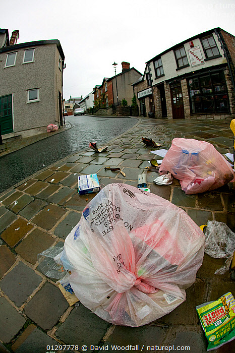 Torn council waste bags, with rubbish scattered over the streets of a small town. Wales, UK July 2008  ,  BIN BAGS,BUILDINGS,ENVIRONMENTAL,EUROPE,LITTER,REFUSE,RUBBISH,SERVICES,STREETS,TOWNS,UK,United Kingdom  ,  David Woodfall