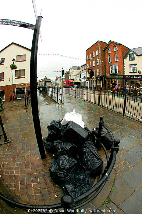 Uncollected council waste bags from businesses, in the streets of a small town. Wales, UK July 2008  ,  BIN BAGS,BUILDINGS,COMMUNITIES,ENVIRONMENTAL,EUROPE,LITTER,REFUSE,RUBBISH,SERVICES,STREETS,TOWNS,UK,United Kingdom  ,  David Woodfall