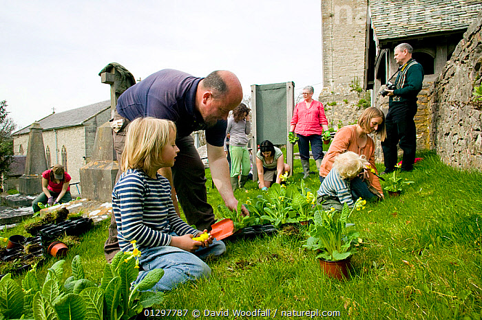 People of Henllan village 'Bee Friendly Project'  planting Cowslips (Primula Veris) in churchyard to attract wild and honey bees, organised by North Wales Wildlife Trust and Cadwyn Clwyd, Community Nature Conservation. Wales, UK April 2010  ,  APIS MELLIFERA,BUILDINGS,CAUCASIAN,CHILDREN,CHURCHES,CHURCHYARD,COMMUNITIES,COMMUNITY,CONSERVATION,COWSLIP,DIGGING,EUROPE,FAMILIES,FLOWERS,GARDENING,LANDSCAPES,OUTDOORS,PEOPLE,PLANTING,UK,VILLAGES,United Kingdom ,honeybee,honeybees  ,  David Woodfall