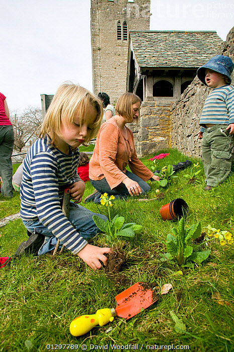 People of Henllan village 'Bee Friendly Project'  planting Cowslips (Primula Veris) in churchyard to attract wild and honey bees, organised by North Wales Wildlife Trust and Cadwyn Clwyd, Community Nature Conservation. Wales, UK April 2010  ,  APIS MELLIFERA,BUILDINGS,CAUCASIAN,CHILDREN,CHURCHES,CHURCH YARD,COMMUNITIES,COMMUNITY,CONSERVATION,COWSLIP,EUROPE,FAMILIES,FLOWERS,GARDENING,GIRLS,LANDSCAPES,OUTDOORS,PEOPLE,PLANTING,PRIMULA VERIS,TROWELS,UK,VILLAGES,WOMAN,United Kingdom ,honeybee,honeybees  ,  David Woodfall