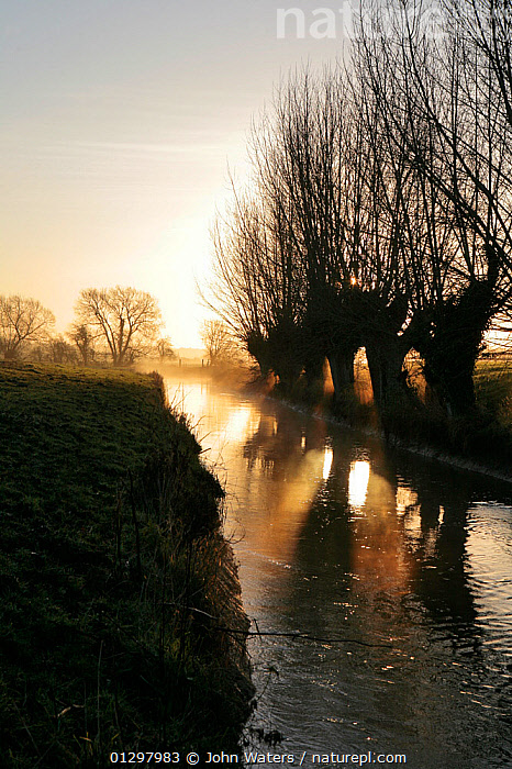 The River Cary at dawn fringed by Willows (Salix sp.) flowing through the Somerset Levels near High Ham, Langport, Somerset, UK, December 2009,  ,  ATMOSPHERIC,COUNTRYSIDE,DAWN,ENGLAND,EUROPE,LANDSCAPES,REFLECTIONS,RIVERS,UK,VERTICAL,WATER,WILLOW TREES,WINTER,United Kingdom  ,  John Waters