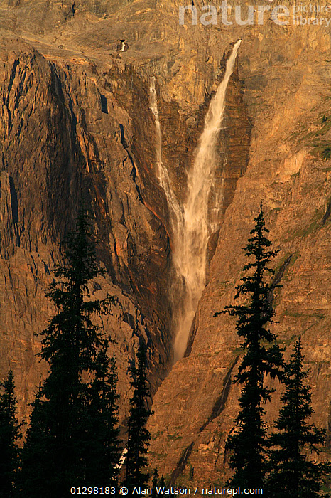 View to Helmet Falls through forest of Engelmann spruce (Picea engelmannii) and Subalpine fir (Abies lasiocarpa) in early morning light, Kootenay National Park, British Columbia, Canada. World Heritage Site Helmet Falls at 1,100 feet (353 metres) high is one of the highest waterfalls in the Canadian Rockies July 2007  ,  CANADA,CLIFFS,CONIFEROUS,LANDSCAPES,NP,RESERVE,RIVERS,ROCKY MOUNTAINS,SILHOUETTES,TREES,VERTICAL,WATERFALLS,North America,Geology,National Park,PLANTS,,Canadian Rocky Mountain Parks World Heritage Site, UNESCO World Heritage Site,Rocky Mountains,Rockies,  ,  Alan Watson