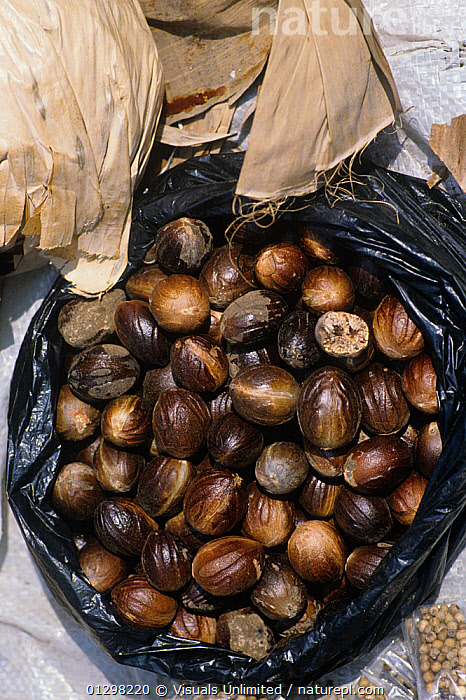 Nutmeg sold in a market, Indonesia.  ,  BROWN,COLOR,DIRECTLY,DRINK,FOOD,FRAGRANT,IMAGE,INDONESIA,LARGE,LENGTH,MARKET,NUTMEG,OBJECTS,OUTDOORS,OVAL,SPICE,VERTICAL,Asia  ,  Visuals Unlimited