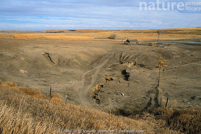 Extreme soil erosion due to cattle overgrazing in a drought-affected arid region, Western USA.  ,  ANIMAL,ARIDITY,CATTLE,COLOR,DROUGHT,DROUGHTS,ERODING,EROSION,HORIZONTAL,IMAGE,LIVESTOCK,OUTDOORS,OVERGRAZED,OVERGRAZING,RANCH,RANCHING,RON,SOIL,SPOMER  ,  Visuals Unlimited
