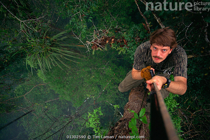 Self portrait of biologist / photographer, Tim Laman, climbing a rope into the rainforest canopy in Borneo. Gunung Palung National Park, Borneo, West Kalimantan, Indonesia, BORNEO,CLIMBING,HIGH ANGLE SHOT,MAN,MATURE MAN,OUTDOORS,PEOPLE,RESEARCH,RESERVE,SOUTH EAST ASIA,TREES,TROPICAL RAINFOREST,Asia,PLANTS, Tim Laman
