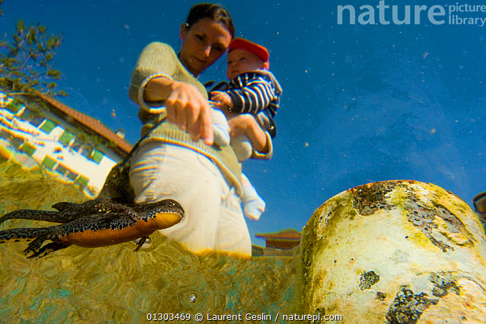 Alpine newt (Triturus alpestris) breathing at the surface of a garden pond, with mother and child observing, viewed from underwater, Switzerland. April 2010.  ,  AMPHIBIANS, blue sky, BREATHING, BUILDINGS, CATALOGUE2F, Caucasian, child, Childhood, CHILDREN, EUROPE, garden, GARDENS, holding, LEARNING, low angle view, mid adult, MOTHER-BABY, nature, NEWTS, one animal, PEOPLE, pointing, pond, PONDS, surfacing, Switzerland, teaching, Toddler, two people, UNDERWATER, URBAN, VERTEBRATES, WATER, WOMAN  ,  Laurent Geslin