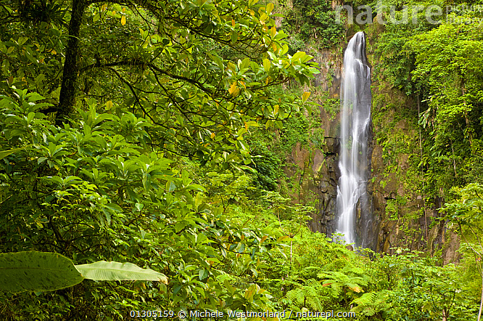 Trafalgar Falls, in tropical forest, Roseau, Dominica, West Indies, Caribbean. July 2008.  ,  CARIBBEAN,FORESTS,ISLANDS,LANDSCAPES,RIVERS,TROPICAL,WATER,WATERFALLS,WEST INDIES  ,  Michele Westmorland
