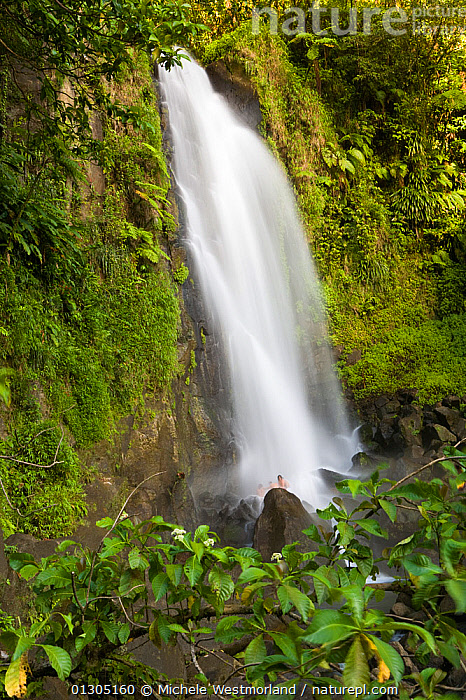 View of Trafalgar Falls, with people bathing, in tropical forest, Roseau, Dominica, West Indies, Caribbean. July 2008.  ,  BATHING,CARIBBEAN,FORESTS,ISLANDS,LANDSCAPES,OUTDOORS,PEOPLE,STREAMS,TROPICAL,VERTICAL,WATER,WATERFALLS,WEST INDIES  ,  Michele Westmorland