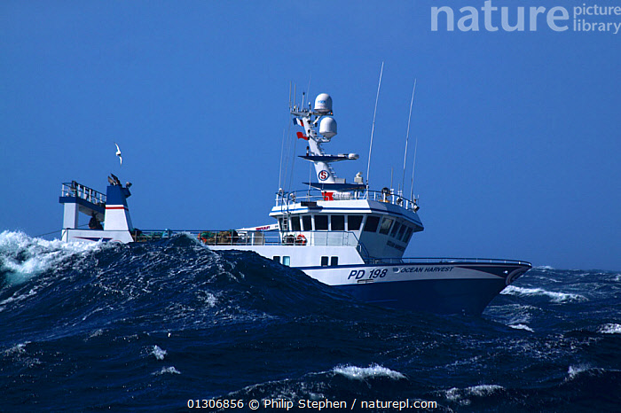 """Fishing vessel """"Ocean Harvest"""" in heavy weather on the North Sea, September 2010. Property released.  ,  BOATS,EUROPE,FISHING BOATS,HEAVY SEAS,NORTH SEA,OBSCURED,PROFILE,STORMS,TRAWLERS,WAVES,WEATHER,WORKING BOATS,WORKING-BOATS ,core collection xtwox  ,  Philip Stephen"""
